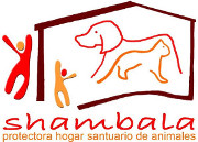 shambalasf